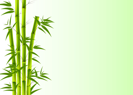 Vector illustration of Green Bamboo background with copyspace