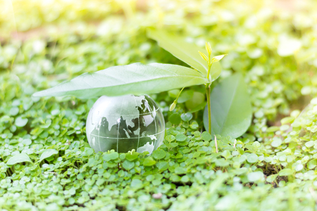 Glass globe on green plant for Eco friendly and world environmental saving concept