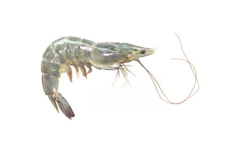 Raw fresh shrimp on white background