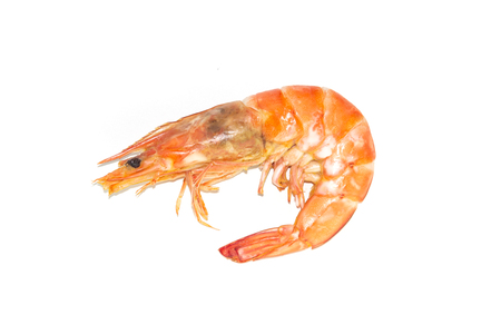 Fresh cooked shrimp on white background