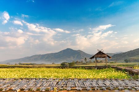 Beautiful of Nature Landscape with Mountain, small hut and yellow flower field 写真素材