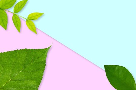 Natural background with green leaves and pink blue color backdrop. Fresh template design Zdjęcie Seryjne