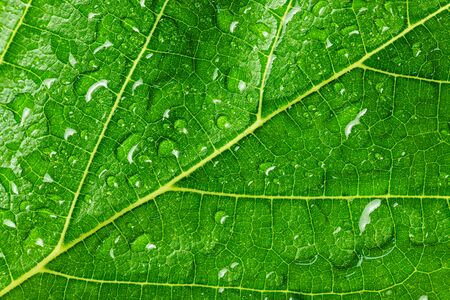 Natural green leaf and drops of water, texture background