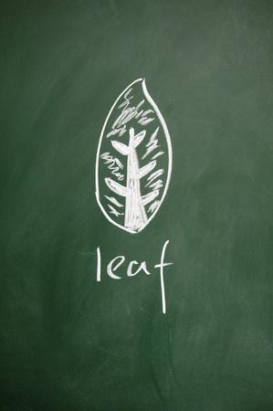 leaf sign drawn with chalk on blackboard photo