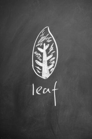 leaf sign drawn with chalk on blackboard Stock Photo - 12649396