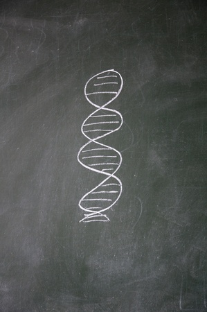 acquaintance: DNA sign drawn with chalk on blackboard