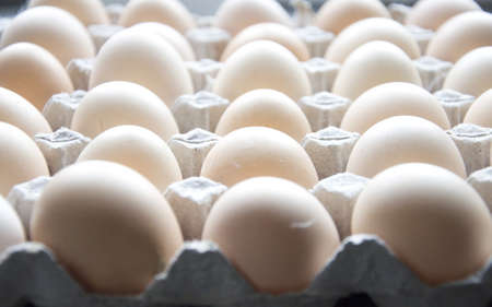 eggs background Stock Photo - 13011329