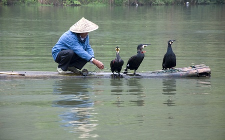 cormorants: A Chinese fishermen and cormorants Stock Photo