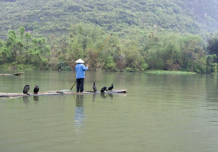 A Chinese fishermen and cormorants photo