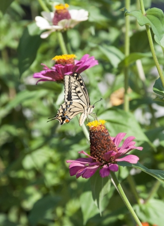 Butterfly on the flower photo