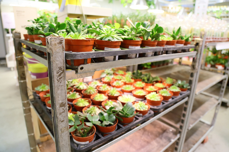 barbary: Live plant selling in the store