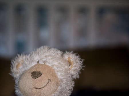 Teddy dog toy Stock Photo