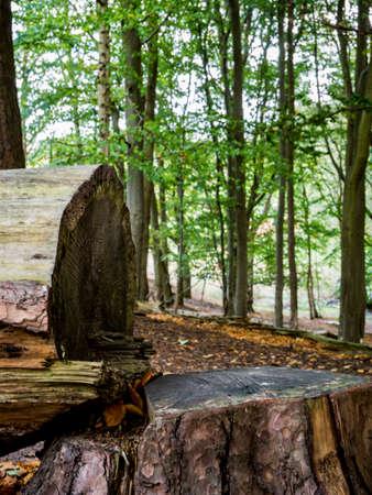 Fell tree in woodland