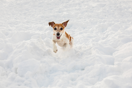 Active snow winter dog walking outside Stock Photo