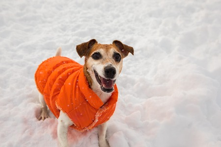 Smiling happy winter dog