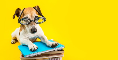 Adorable back to school dog banner. Yellow background. Dog in glasses. preparation to exam