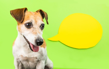 Wondering smiling dog on green background with yellow speech bubble. Cute pet portrait. Jack Russell terrier adorable muzzle