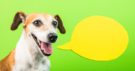 Happy smiling active dog face with speech balloon. Yellow and green. Laughing muzzle. positive emotions Stock Photo
