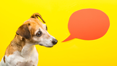 curious wondering asking emotion expression dog muzzle. yellow background and orange speech balloon. Funny bright photo. Coll portrait. Empty space for your text information Foto de archivo