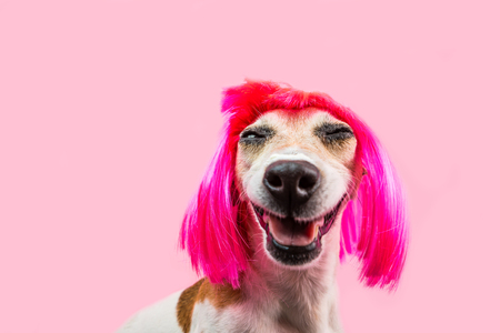 Happy adorable smiling dog in pink wig Stock fotó