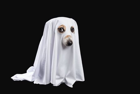 Ghost on black background. Halloween carnaval party
