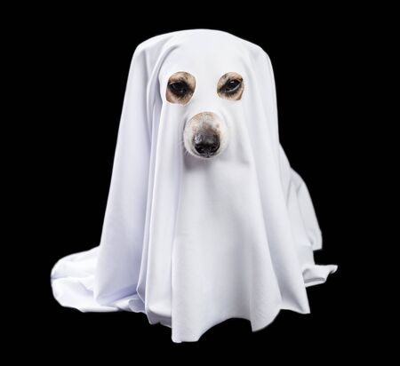 Adorable white ghost dog in black background. Halloween party theme. Happy halloween