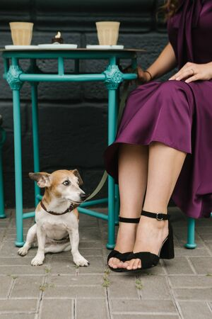 Dog friendly cafe. Pet sitting under the table. Elegant purple dress.