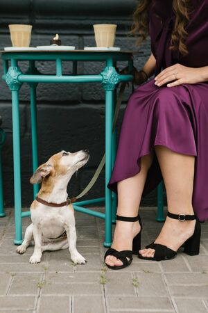 Dog in cafe. Looking to the owner. Purple elegant dress. Friends 免版税图像
