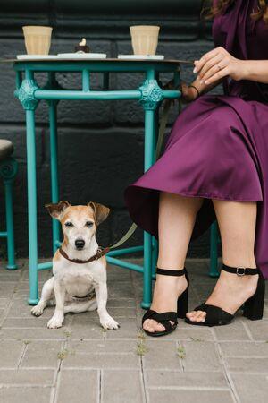 Cafe with pet. Elegant woman having coffe in street cafe. Woman legs 免版税图像