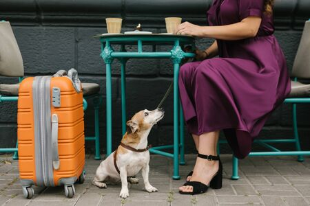 Cute dog sitting under the table and looking up to the woman in purple elegant dress