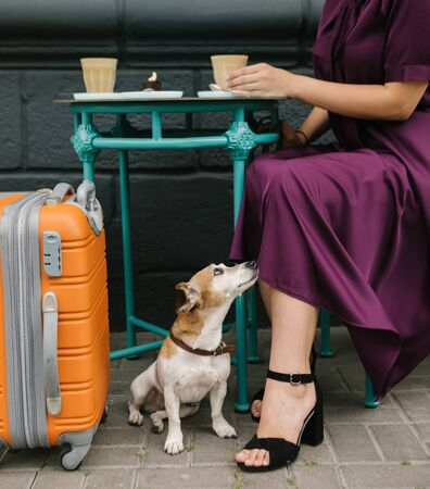 Adorable dog in street cafe under the table. Woman having coffee break during travel trip. Purple and blue 免版税图像