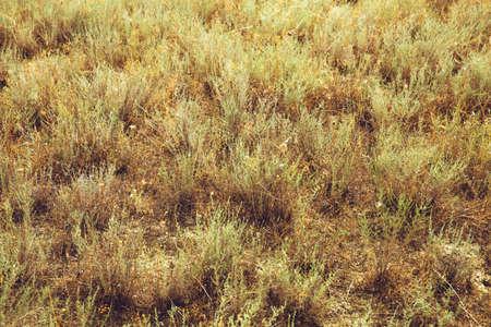 Arid terrain. Yellow grass. Summer Heat drought