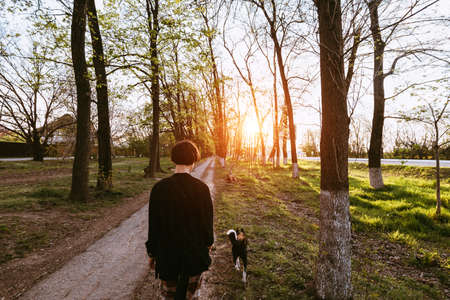Young woman with a dog walks among the trees along the path at sunset View from the back Stockfoto