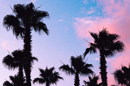 Silhouette palm tree at lilac pink sunset. Vacation and relaxation at sea.