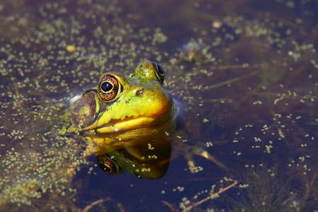 Sunbathing  Sun top  for a frog Stock Photo