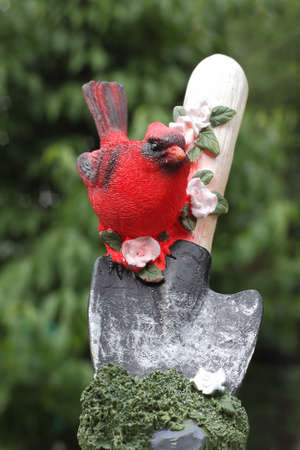Northern Cardinal on the shovel