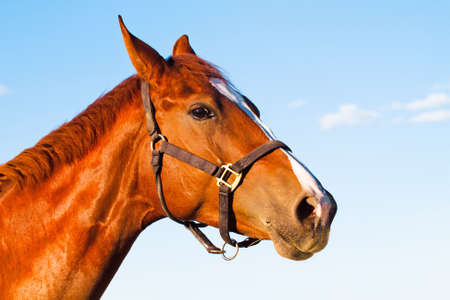 horse with the blue sky background Stock Photo - 14506858