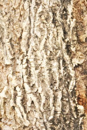 rough wood texture 免版税图像