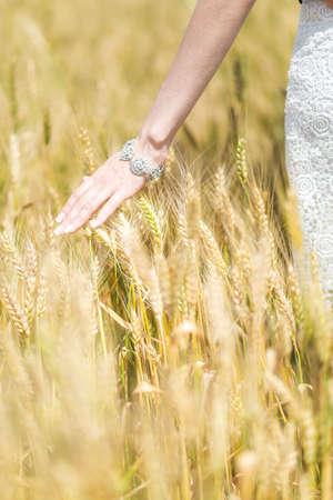 threw: Womans hand slide threw ears of wheat in sunset light