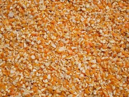 Background texture of corn seed and grain mix for livestock feed