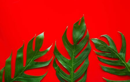 Forest treeline made of green leaves on red background. Minimal nature concept. Flat lay. Reklamní fotografie