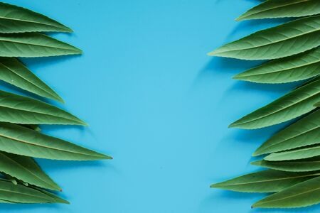 Forest treeline made of green leaves on blue background. Minimal nature concept. Flat lay. Stock fotó