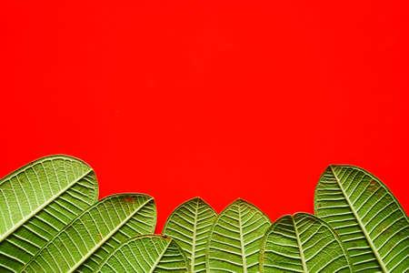 Forest treeline made of green leaves for background. leaf background
