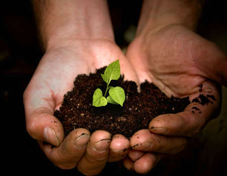 saplings: Taking care of new development or the environment Stock Photo