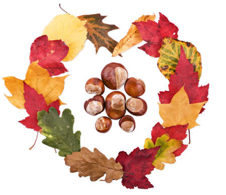 Heart shape made out of colourful fall leaves with conkers photo