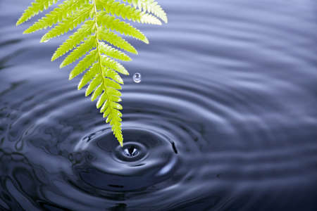 Fern leaf with water drop and ripples