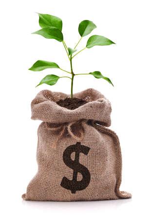 signo pesos: Bolsa de dinero con el signo de d�lar y el dinero �rbol que crece fuera de la parte superior aislado en blanco Foto de archivo