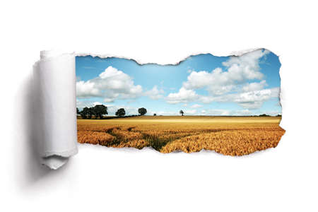 Tearing a paper frame hole to reveal wheat field landscape photo