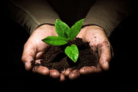 cupped hands: Taking care of new development or the environment Stock Photo