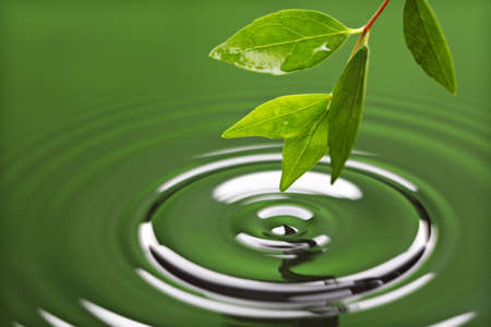 Leaf with drop of rain water causing ripple with green background Stock Photo